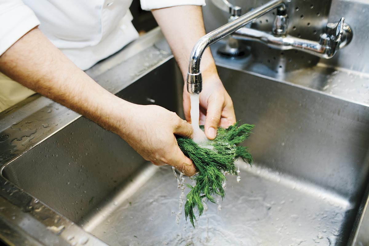 Hands washing dill.