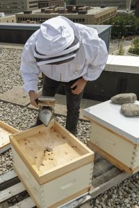 Beekeeper [Tom Nolan] holding a bee smoker directly to one of his hives.