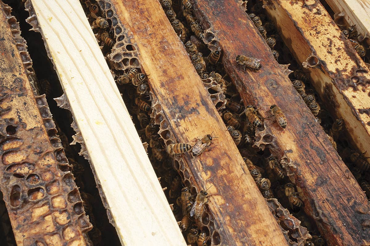 Close-up of sliding frame honeycombs inside the hive, from above.