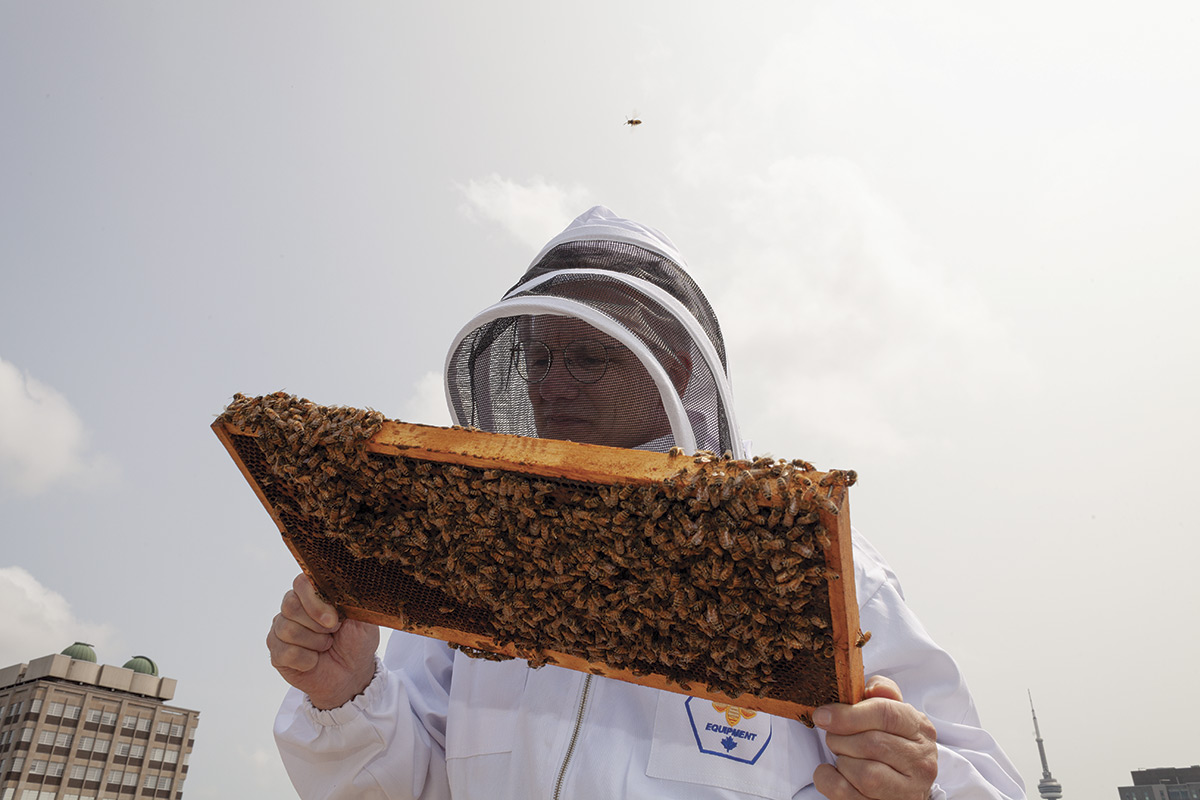 Close-up of beekeeper [Tom Nolan] holding a sliding frame honeycomb up to his face.